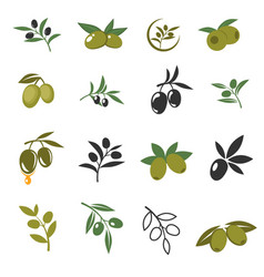 Mediterranean olive branches icons with oil vector