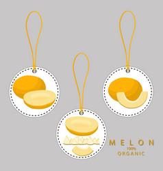 the melon vector image