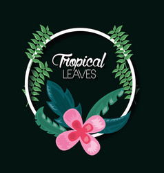tropical leaves dark background vector image