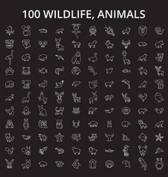 wildlife animals editable line icons set vector image