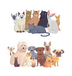 cats and dogs border set front view pets vector image vector image
