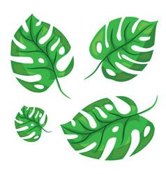 cartoon tropical monstera leaves vector image