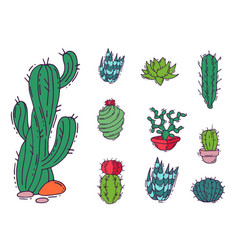 Cactus home nature of green vector