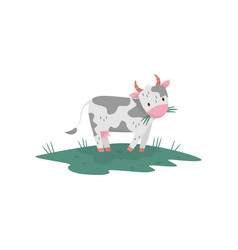 Cute cow eating grass farm animal grazing on vector
