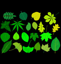 Tree leaves green set vector