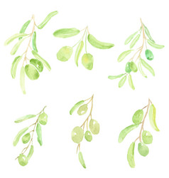 Watercolor hand drawn olive branch elements vector