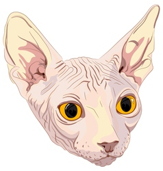 Cat breed sphynx vector