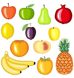 fruit cartoon vector image vector image