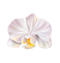 3d white orchid flower realistic design vector