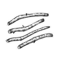 Ashwagandha riits adaptogenic plant medical herbs vector