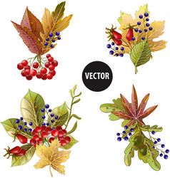 bouquets of autumn yellow leaves and berries vector image
