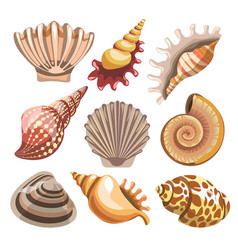 seashell and clam isolated underwater creatures vector image