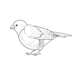 A monochrome sketch of titmouse vector image vector image