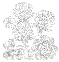 Zentangle stylized clover hand drawn lace vector