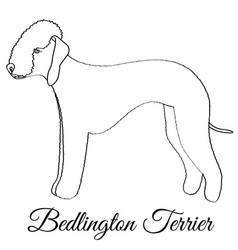 Bedlington terrier dog coloring vector