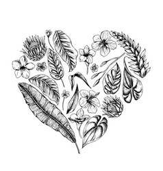 collection of hand drawn tropical plants vector image