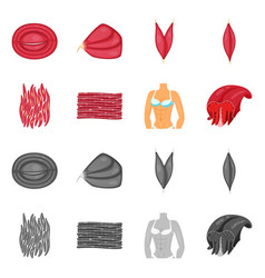 Fiber and muscular logo vector
