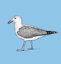 Sketch a big seagull vector