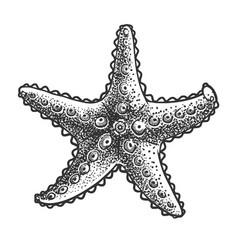 Starfish sketch vector