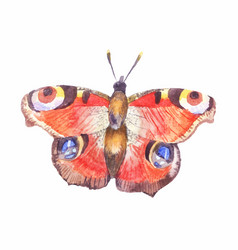 Watercolor butterfly aglais io isolated on white vector