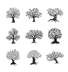Magnificent olive and oak trees silhouette vector