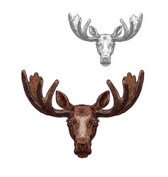 moose or elk wild animal head isolated sketch vector image