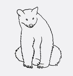bear animal artistic sketch vector image vector image