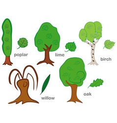 Deciduous Trees vector image vector image