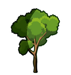 tree foliage branch wood trunk bark shadow vector image vector image