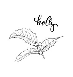 black and white hand drawn holly ilex branch with vector image