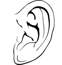 Human ear vector image