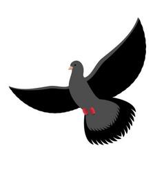 black dove isolated dark pigeon on white vector image