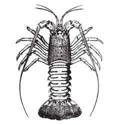 Crawfish vintage vector