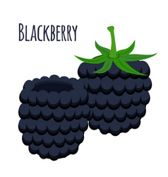 Fresh berries sweet blackberry flat vegetarian vector