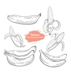 hand drawn banana collection sketch style vector image