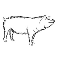 pig sketch doodle hand drawn vector image