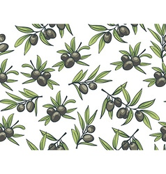 Black olives from branches on a white background vector image