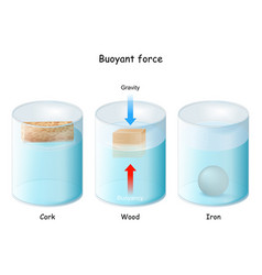 Buoyant force archimedes principle vector