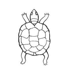 hand drawn tortoise vector image