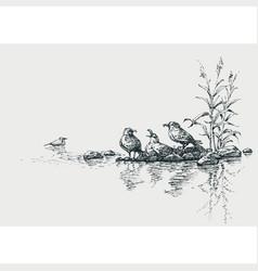 Seagulls on seashore artistic marine scene vector