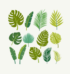 Tropical leaves palms trees vector