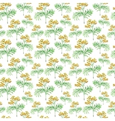 Watercolor tansy herb seamless pattern vector image