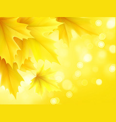 Autumn poster with yellow maple leaves vector