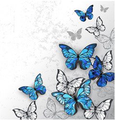 blue and white butterflies vector image