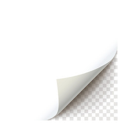 curly page corner ready to apply to your design vector image