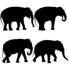 set silhouette large african elephant on a white vector image