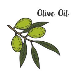 Olive oil design element for logo label emblem vector