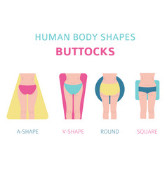 human body shapes woman buttocks types set vector image