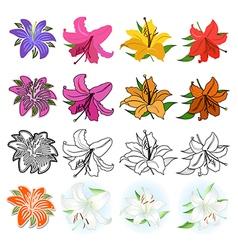 Lilies set vector