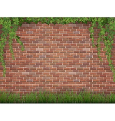 ivy and grass on brick wall background vector image